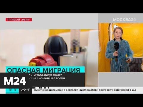 Минздрав подготовил рекомендации по лечению коронавируса - Москва 24