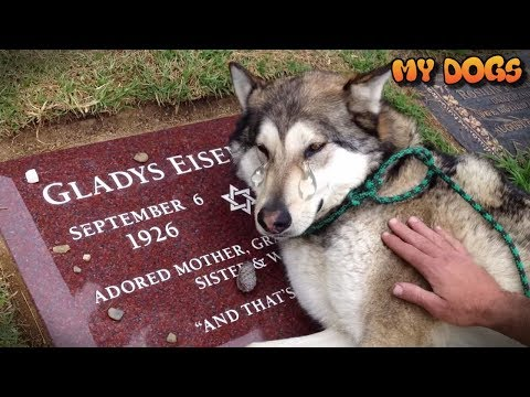 Dogs Loyal- Faithful Dogs Who Never Leave You Alone- Video Compilation