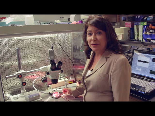 Creating Heart Stem Cells