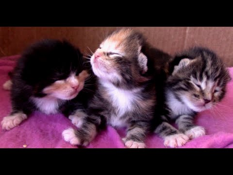 Newborn Kittens with Eyes Closed