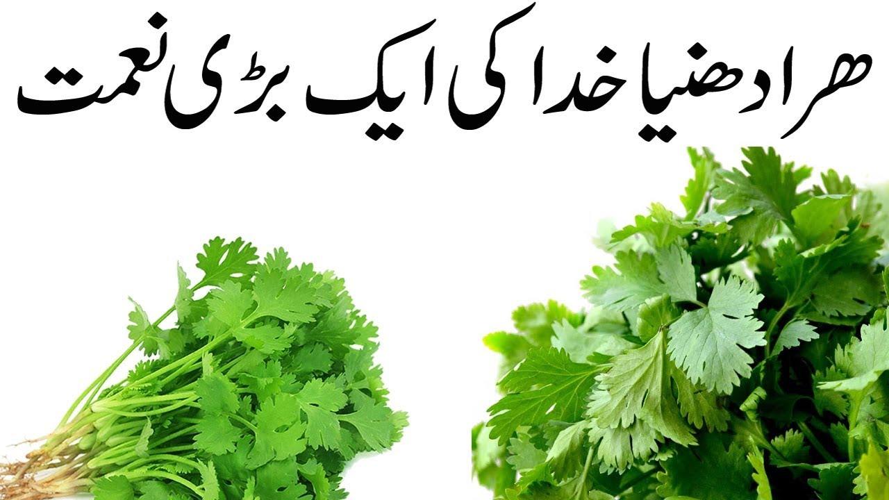 zsírégető jelentése urdu nyelven