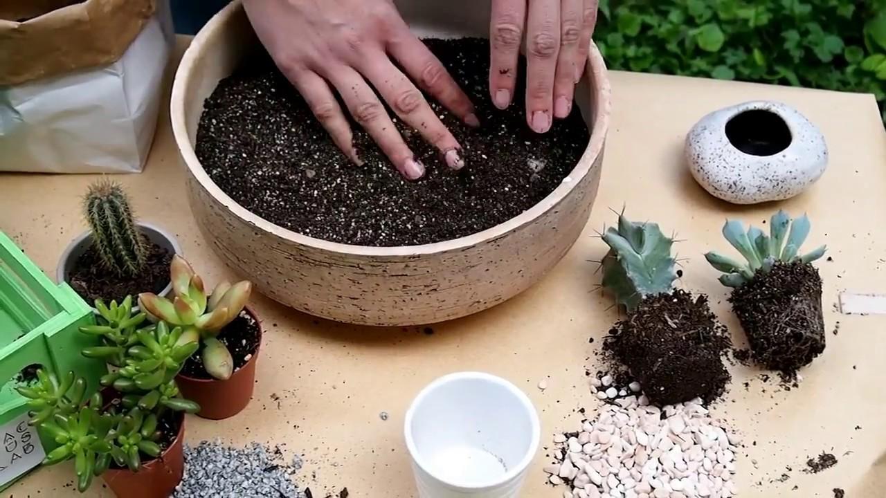 Cactus Lab: Направи си сам | Почва за кактуси