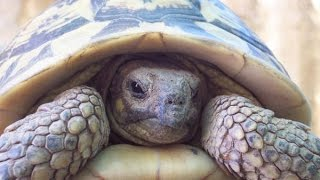 The Reptiles (Part-3) Turtles & Tortoises (Nature Documentary) thumbnail