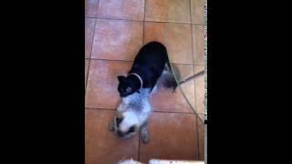 Собака и кошка любят друг - друга