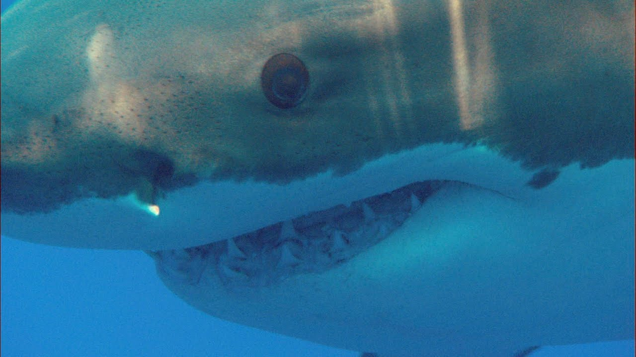 Hear This Man's Stunning Tale Of Surviving A Shark Attack ...