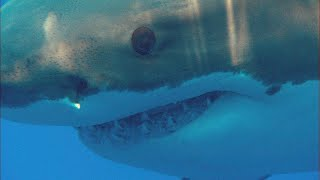 Hear This Man's Stunning Tale Of Surviving A Shark Attack | I Was Prey