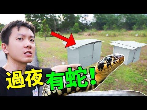 """紙箱屋到山下過夜不成,没想到这里有""""蛇""""?!【ft jerryoppa】"""