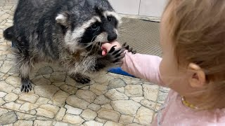 ZEFIRKA BECOMES A PET RACCOON / Gorushka washes cat toys