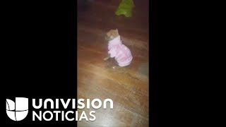 El videíto: Este chihuahua no puede mantenerse en pie luego de que su dueña le pone un suéter