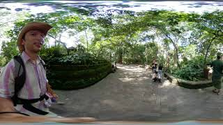 Monkey Forest in 360º VR