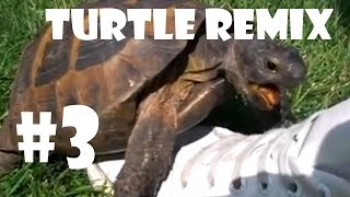 Turtle Has Sex With A Shoe Remix - Compilation 3