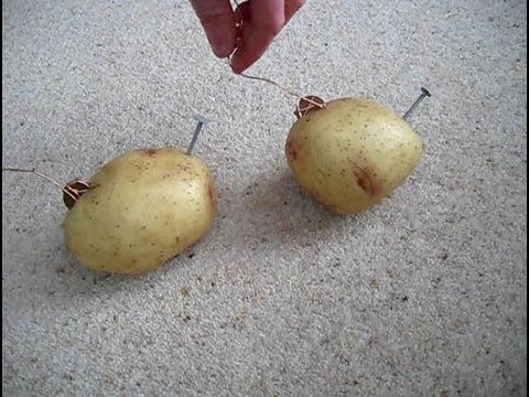 potato electricity Which potato or tuber will be best to use for electricity in case there is a blackout people can use a potato or tuber there are other projects or sources like mine but i just used two.