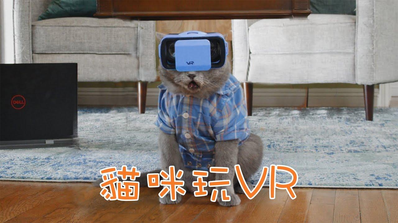 貓咪玩VR!牠能成為戀愛高手嗎? | Aaron與小寵物