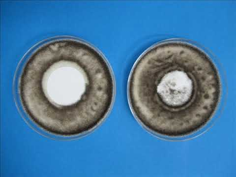 Antimicrobial air filter media vs untreated air filter media