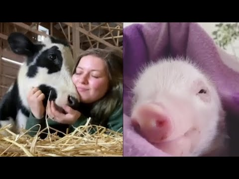 Rescued Animals Showing Love to Their Rescuers