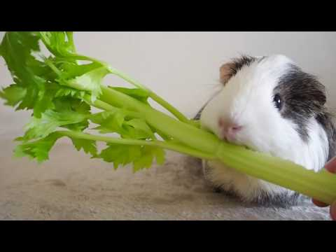 Patrice demands a celery increase