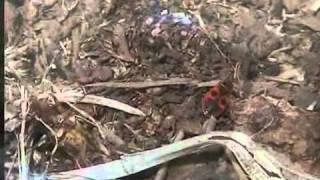 ПОЛОЙКА, документальный фильм про деревню