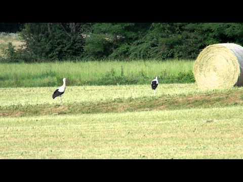 DSCN4714 storks