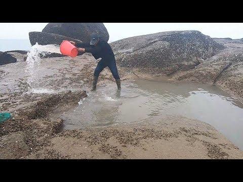 饅頭趕海接連舀兩個水坑,舀幹抓到有毒的漂亮魚,還敢帶回家養著