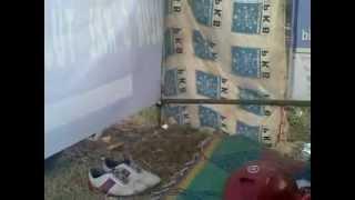 Download Video pemerkosaan guru smp terrekam MP3 3GP MP4