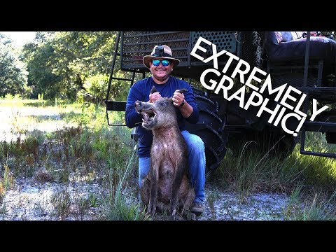 EXTREMELY GRAPHIC: Hog Hunting With Dogs In Florida - Florida Hunting