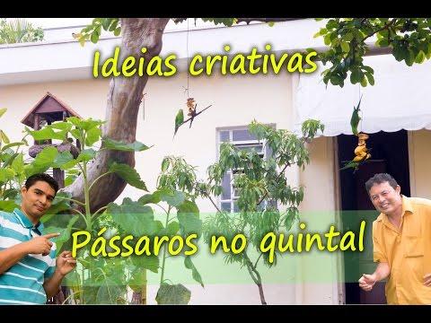 Como atrair Pássaros e aves no quintal, ideias para um jardim alegre, qualidade de vida