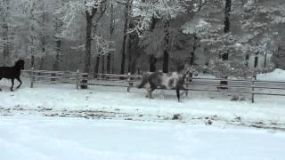 Wakan Tanka o Felicitas i snön