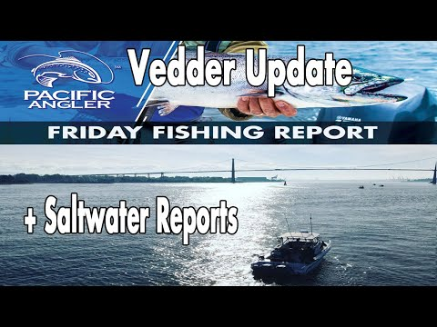 Vancouver Fishing Report - Sept 11th - Vedder Report - Still Low +  Un-predicable Saltwater Fishing