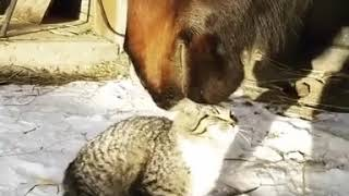 Horse Gently Nuzzles Kitten 1020932