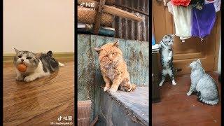 [Góc của méo] Chúng sen sẽ tan chảy khi xem boss làm trò mèo | Part 2 | Tik Tok China | Lầy Channel