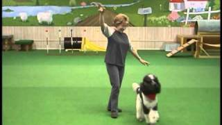 Poodle (Dog) Dancing:  Itsy Bitsy Spider