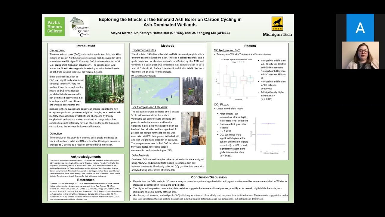 Preview image for Exploring the effects of the emerald ash borer on C cycling in ash-dominated wetlands video