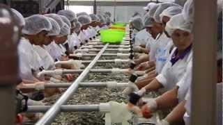 """Conheça uma """"FÁBRICA DE CAMARÃO""""; fábrica de processamento.."""