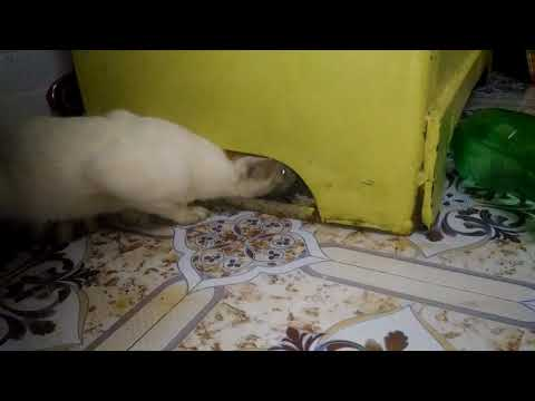 funny  cats pranks