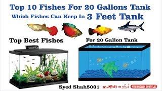 Top 10 Fish for a 20-Gallon Aquarium #How Many Fish for a 20-Gallon Tank?