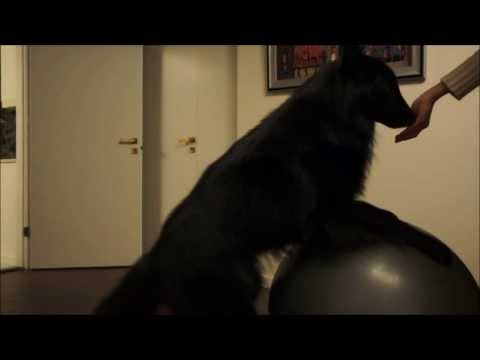 Exercise ball training with dog