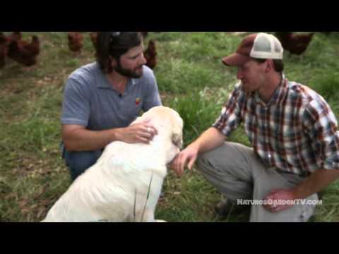 Nature's Garden TV Episode 7