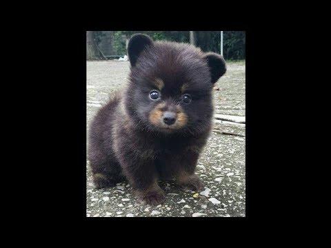 Купили щенка вырос медведь за 6 февраля