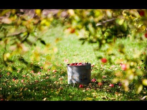аудиокнига салодкия яблыки слушать