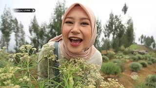 Download Video Halal Living - Keindahan dan Keabadian Bunga Edelweiss di Taman Edelweiss Wonokitri MP3 3GP MP4