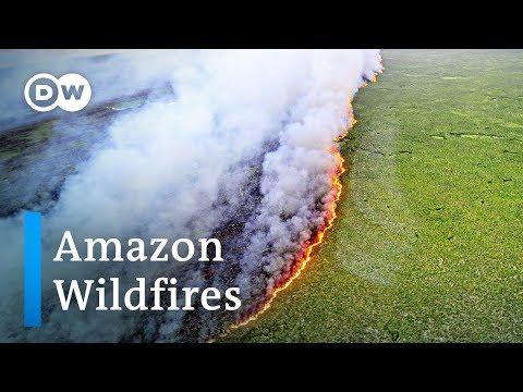 Bolsonaro हरी समूहों पर अमेजन वर्षा वन जंगल की आग को दोषी मानते हैं | DW समाचार