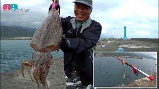 [磯釣沉底]虱目魚活餌釣大花枝 ... 2019/03/台灣69J釣魚俱樂部(69J Fishing Club)