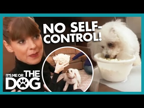 Teaching Your Dog to Control Its Impulses | It's Me or the Dog