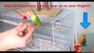 (How To) teach your pet bird to step up on your finger!!!!