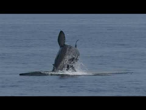 Scottish Natural Heritage - Basking Shark Hotspots in West Scotland