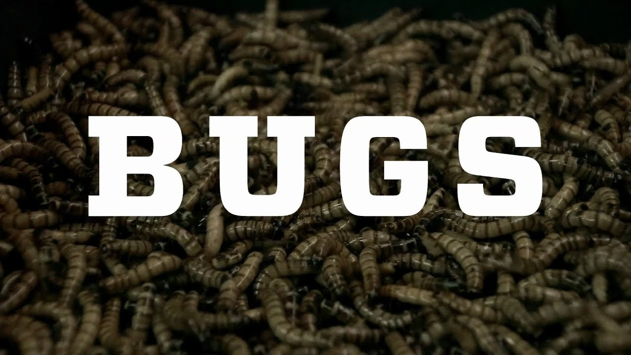 an argument of millennium bug Are you concerned about the possible effects of the millennium bug or are you ignoring it in the hope it will go away.