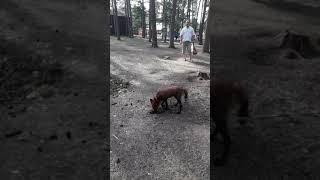 Дикие звери в диких условиях