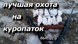 Охота на белую куропатку зимой видео