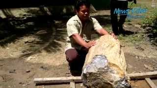 Video VIDEO Ini Fosil Batang Pohon Ulin Seberat 300 Kg Yang Bikin Heboh download MP3, 3GP, MP4, WEBM, AVI, FLV Maret 2018