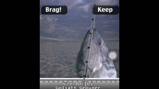 ifishing saltwater edition huge 678 pound goliath grouper